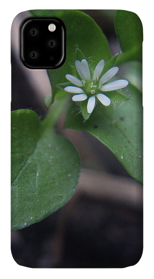 Wildflower IPhone Case featuring the photograph White Wildflower by Holly Morris