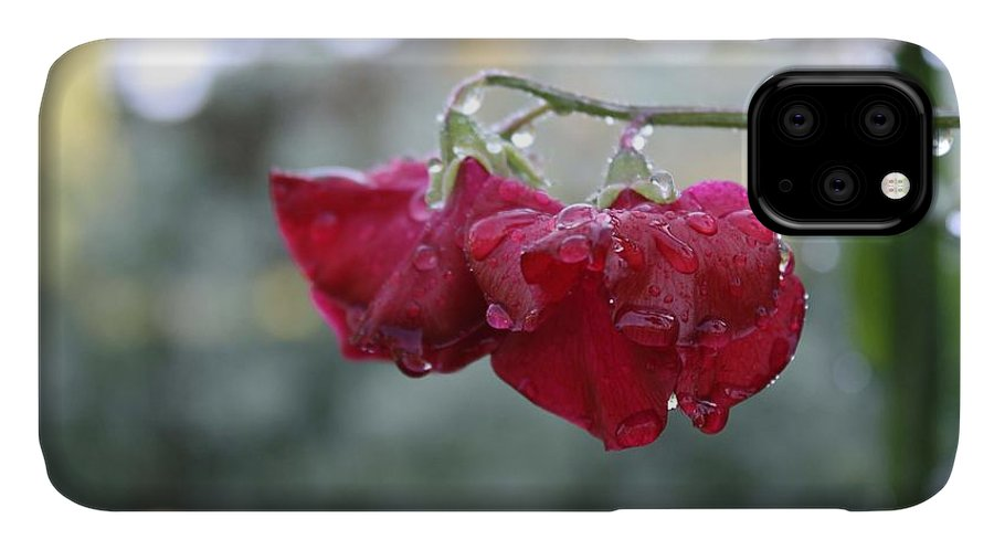 Wine Red IPhone Case featuring the photograph Wine Red Sweet Pea by Vicki Cridland