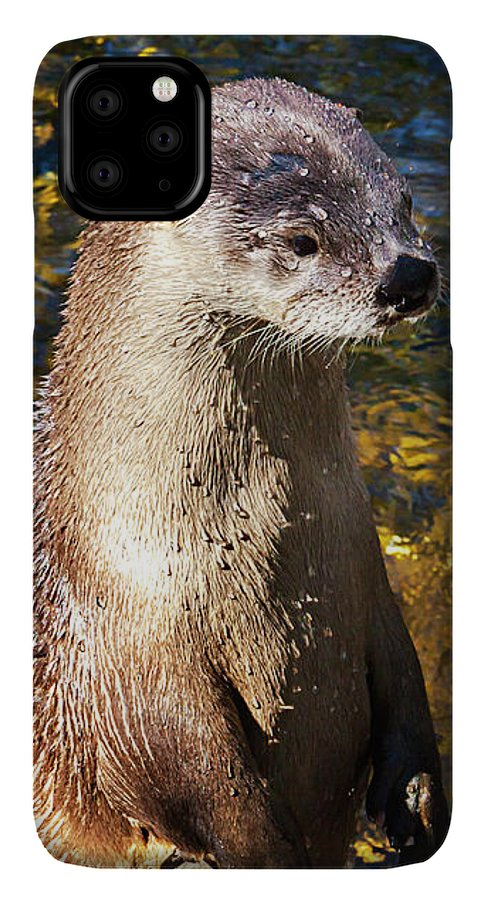 Cute Otter IPhone 11 Pro Max Case featuring the photograph Cute Sea Otter, Animal Decor, Nursery Decor, Otter Phone Case, Otter Throw Pillow, Otter Gift, by David Millenheft