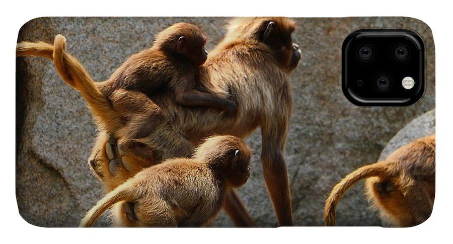 Animal IPhone 11 Pro Max Case featuring the photograph Monkey Family by Dennis Maier