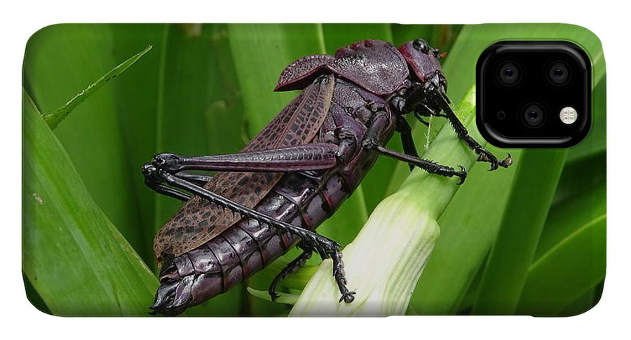 IPhone 11 Pro Max Case featuring the photograph Grasshopper by Stanley Vreedeveld