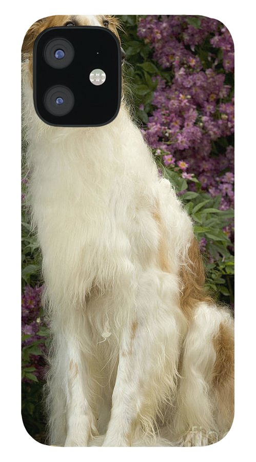 Dog IPhone 12 Case featuring the photograph Borzoi Or Russian Wolfhound by Jean-Michel Labat