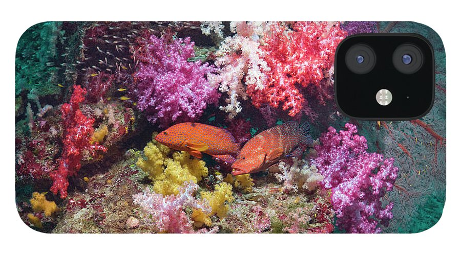 Tranquility IPhone 12 Case featuring the photograph Coral Reef Scenery by Georgette Douwma