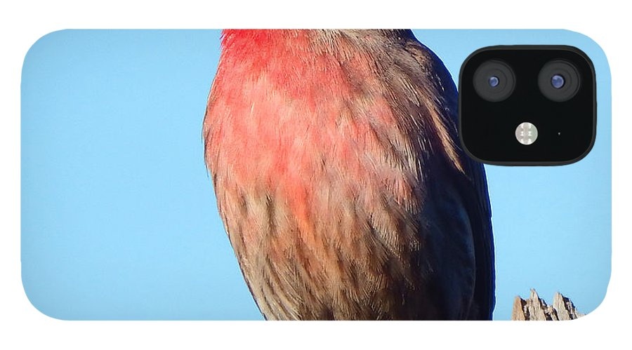 House IPhone 12 Case featuring the photograph House Finch by David G Paul