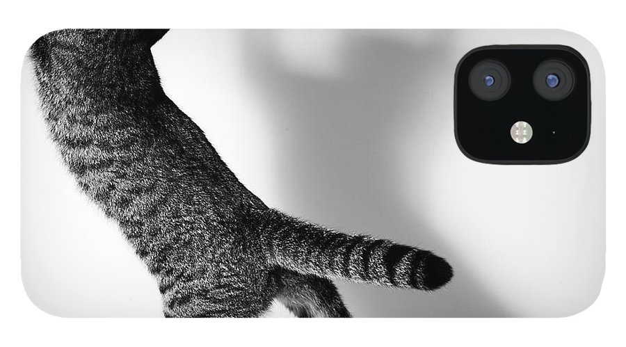 Pets IPhone 12 Case featuring the photograph Jumping Cat by Akimasa Harada