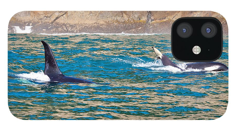 IPhone 12 Case featuring the photograph Killer Whale by Richard Jack-James