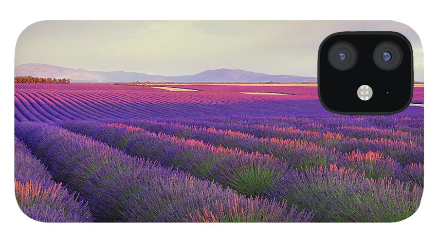 Dawn IPhone 12 Case featuring the photograph Lavender Field At Dusk by Mammuth