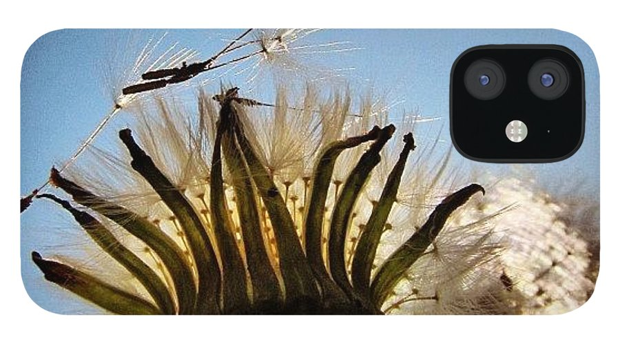 Life IPhone 12 Case featuring the photograph #mgmarts #dandelion by Marianna Mills