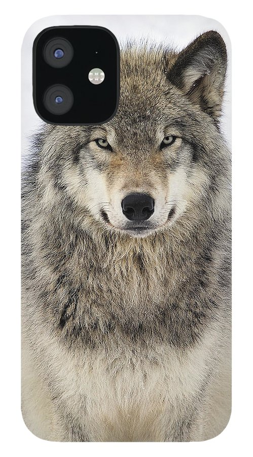 Wolf IPhone 12 Case featuring the photograph Timber Wolf Portrait by Tony Beck