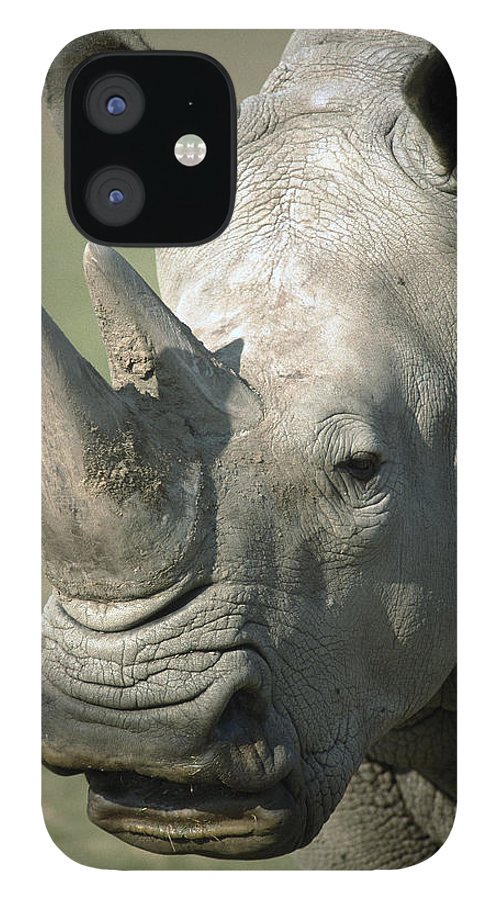 Feb0514 IPhone 12 Case featuring the photograph White Rhinoceros Portrait by San Diego Zoo