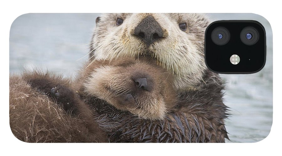 Day iPhone 12 Case featuring the photograph Female Sea Otter Holding Newborn Pup by Milo Burcham