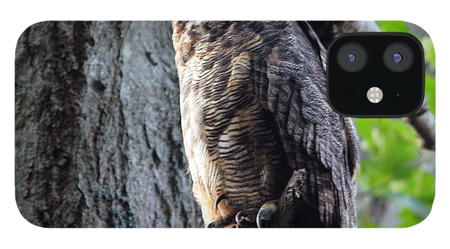 Great Horned Owl IPhone 12 Case featuring the photograph Great Horned Owl by Linda C Johnson