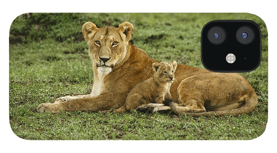 Lion IPhone 12 Case featuring the photograph Mama's Little Baby by Michele Burgess