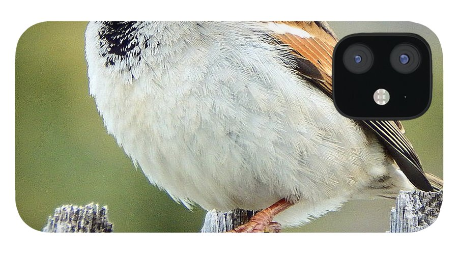 House IPhone 12 Case featuring the photograph House Sparrow by David G Paul