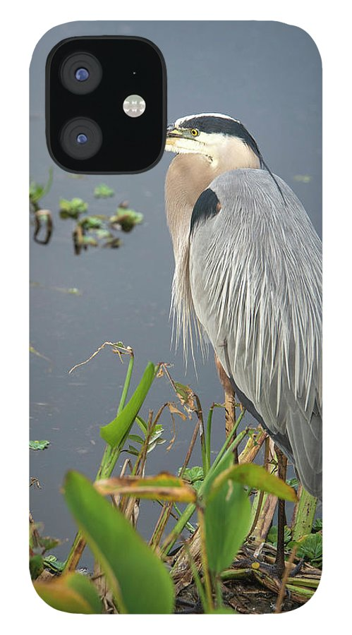Standing Water IPhone 12 Case featuring the photograph Great Blue Heron by Mark Newman