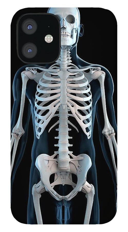 Physiology IPhone 12 Case featuring the digital art Human Skeleton, Artwork by Sciepro
