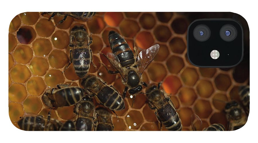 Worker Bees IPhone 12 Case featuring the photograph A Queen Bee Walks In The Center by Chico Sanchez