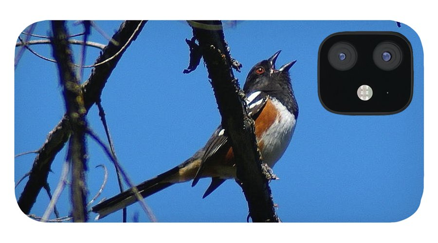 Birds iPhone 12 Case featuring the photograph A Spotted Towhee mid-Song by Ben Upham III