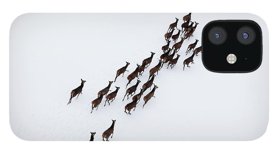 Scenics IPhone 12 Case featuring the photograph Aerial Photo Of A Herd Of Deer Running by Dariuszpa