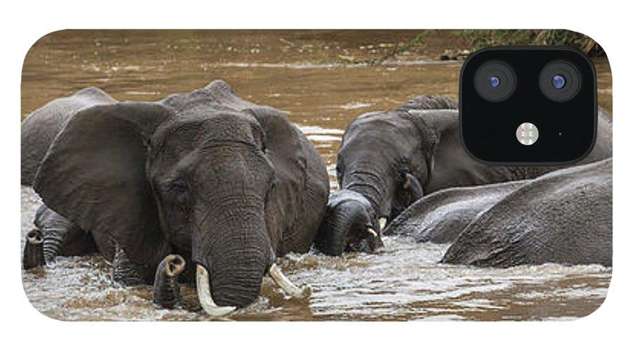Kenya IPhone 12 Case featuring the photograph African Elephants Having A Bath In Mara by Manoj Shah