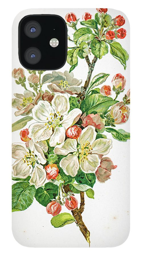 Cherry IPhone 12 Case featuring the digital art Apple Blossom 19 Century Illustration by Mashuk