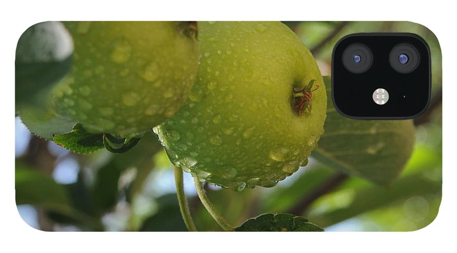 Fine Art IPhone 12 Case featuring the photograph Apples by Leon Hollins III