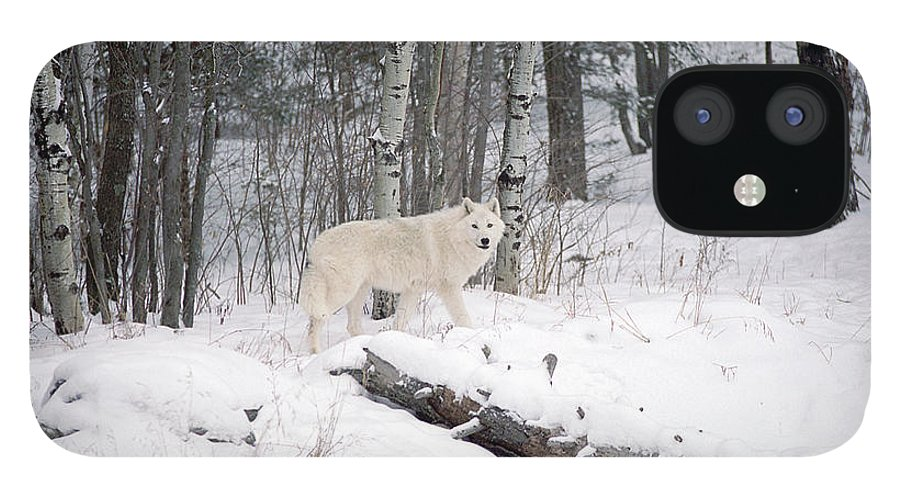 Arctic Wolf iPhone 12 Case featuring the photograph Arctic Wolf by Bill Morgenstern