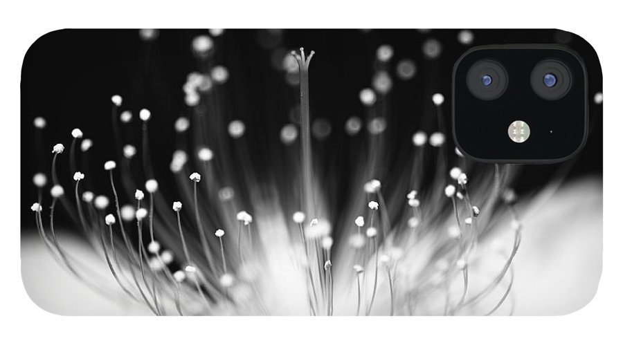 Black Background IPhone 12 Case featuring the photograph As Flame by Char