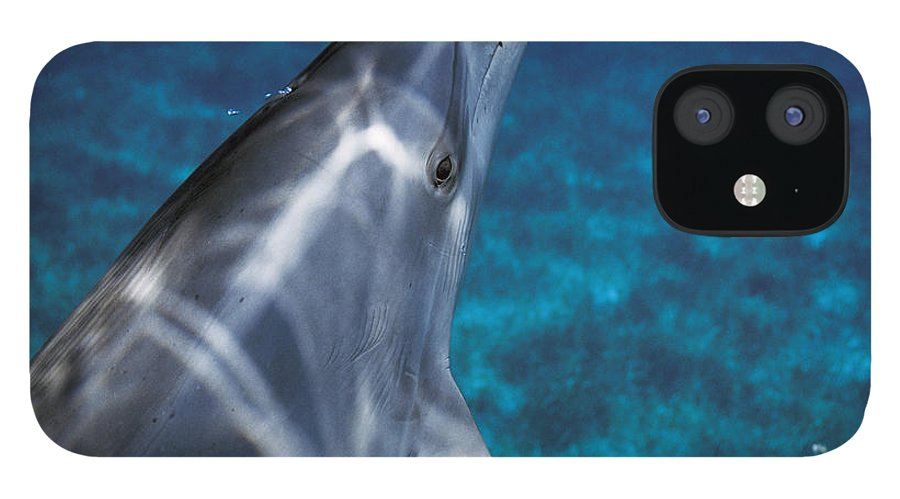 Feb0514 iPhone 12 Case featuring the photograph Atlantic Spotted Dolphin Bahamas by Hiroya Minakuchi