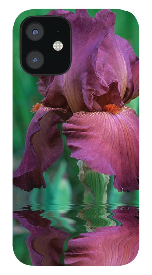 A Bearded Iris Stands In Water IPhone 12 Case featuring the photograph Bearded Iris in Water by Keith Gondron