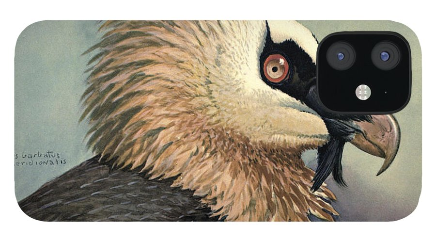 Bearded Vulture iPhone 12 Case featuring the painting Bearded Vulture by Dreyer Wildlife Print Collections