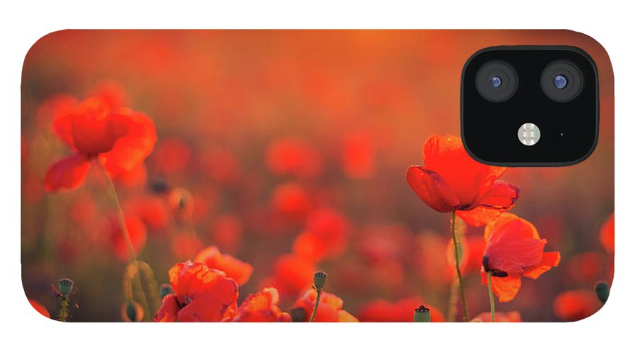 Tranquility iPhone 12 Case featuring the photograph Beautiful Sunset Over Poppy Field by Levente Bodo