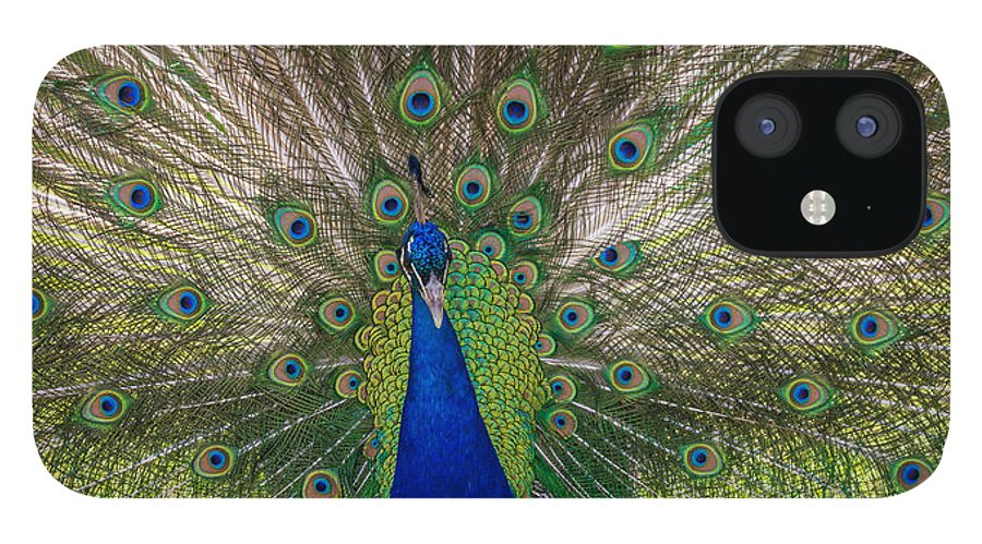 New Jersey IPhone 12 Case featuring the photograph Bird is the Word by Kristopher Schoenleber