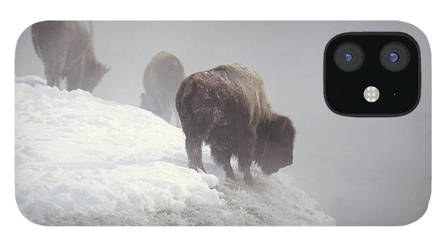 Feb0514 iPhone 12 Case featuring the photograph Bison Along Snowy Riverbank Yellowstone by Konrad Wothe