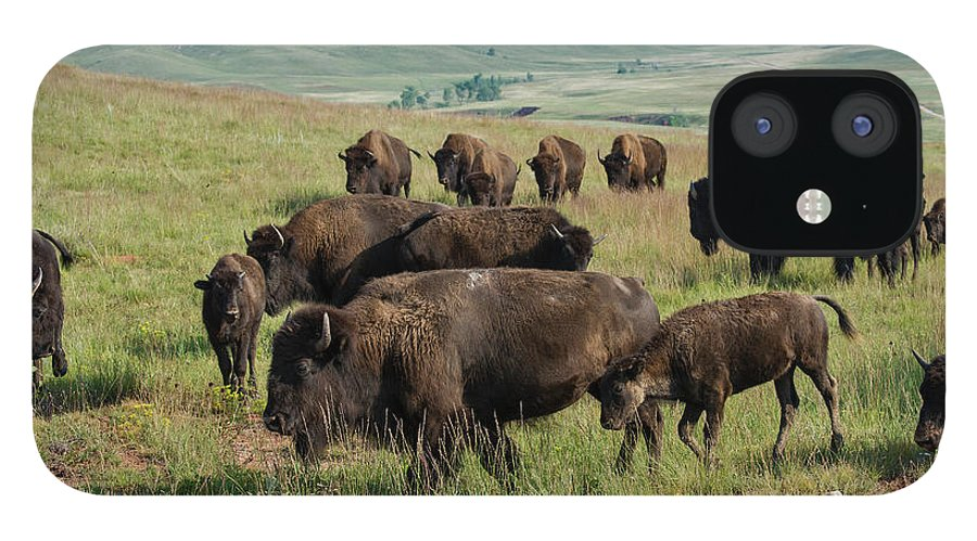 Grass IPhone 12 Case featuring the photograph Bison Buffalo In Wind Cave National Park by Mark Newman