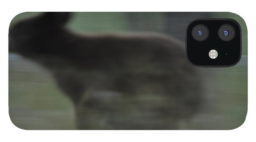 Black Bear iPhone 12 Case featuring the photograph Black Bear Cub Running by Frank Madia