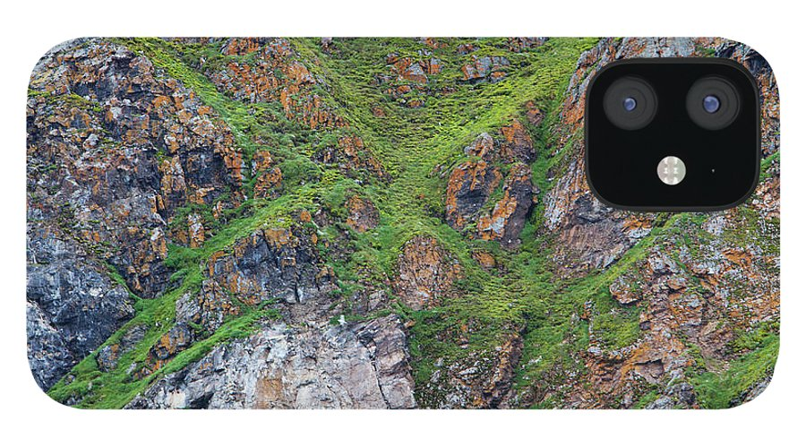 Grass IPhone 12 Case featuring the photograph Black Legged Kittiwake Cliffs In The by Anna Henly