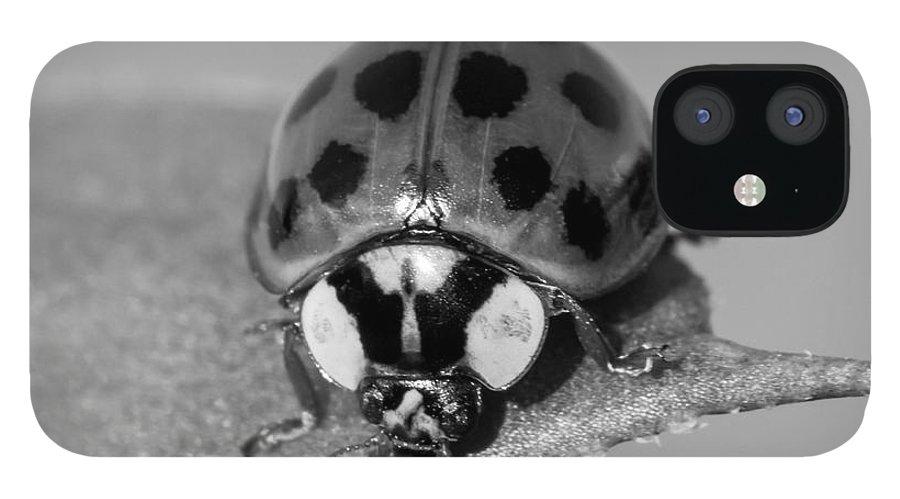 Ladybug Print IPhone 12 Case featuring the photograph Black n White Ladybug by Lucid Mood