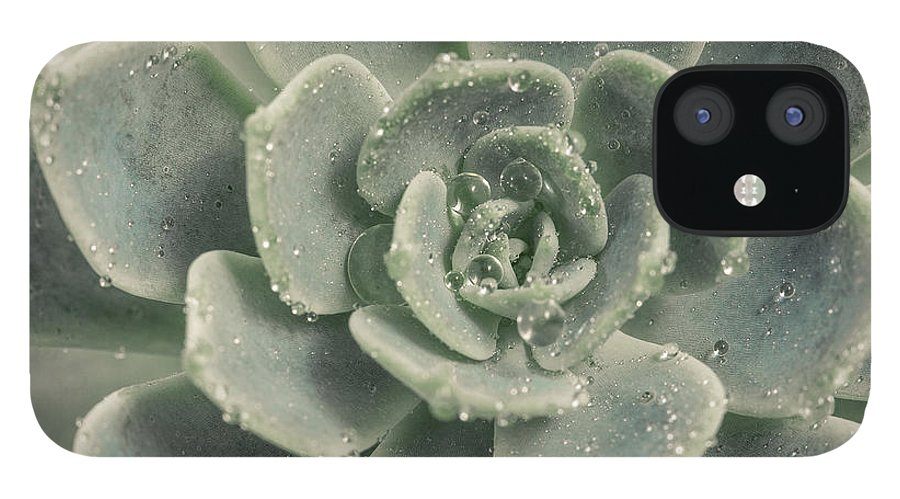 Succulent IPhone 12 Case featuring the photograph Blue Green Succulent 2 by Lucid Mood