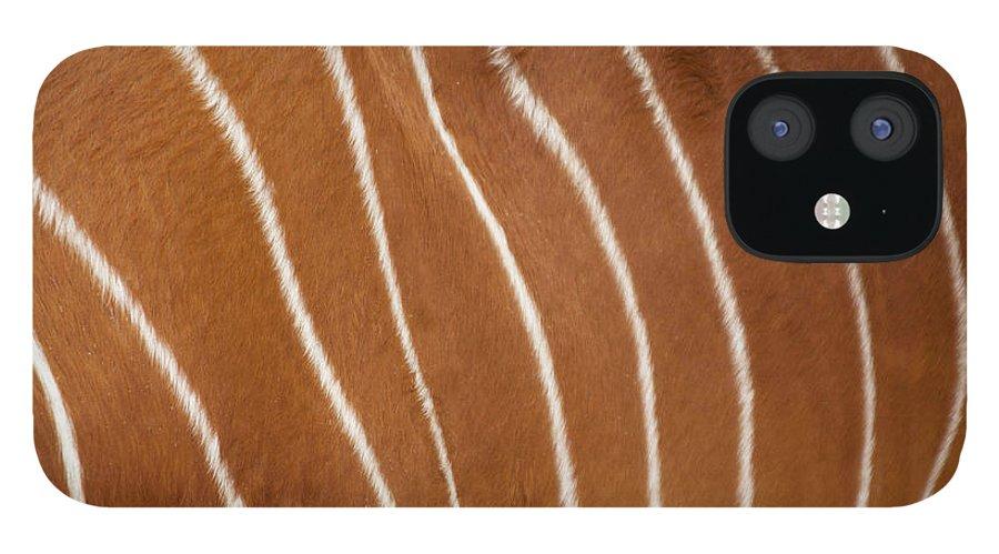 Bongo Antelope IPhone 12 Case featuring the photograph Bongo, Torso Closeup by Geri Lavrov