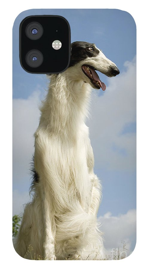 Borzoi IPhone 12 Case featuring the photograph Borzoi Or Russian Wolfhound by Jean-Michel Labat