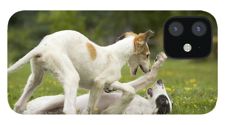 Borzoi IPhone 12 Case featuring the photograph Borzoi Puppies Playing by Jean-Michel Labat