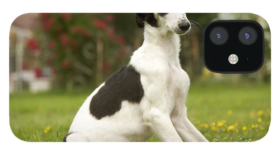 Borzoi IPhone 12 Case featuring the photograph Borzoi Puppy by Jean-Michel Labat