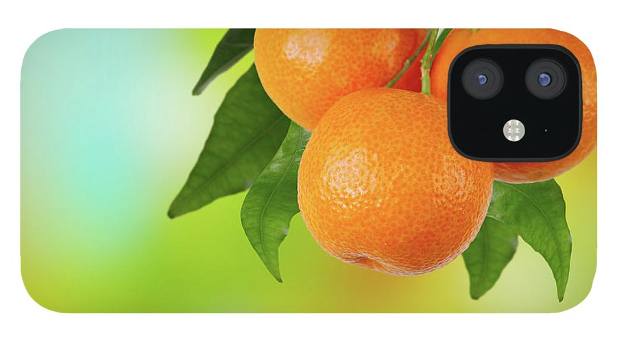 Hanging iPhone 12 Case featuring the photograph Branch Of Tangerines by Sashahaltam