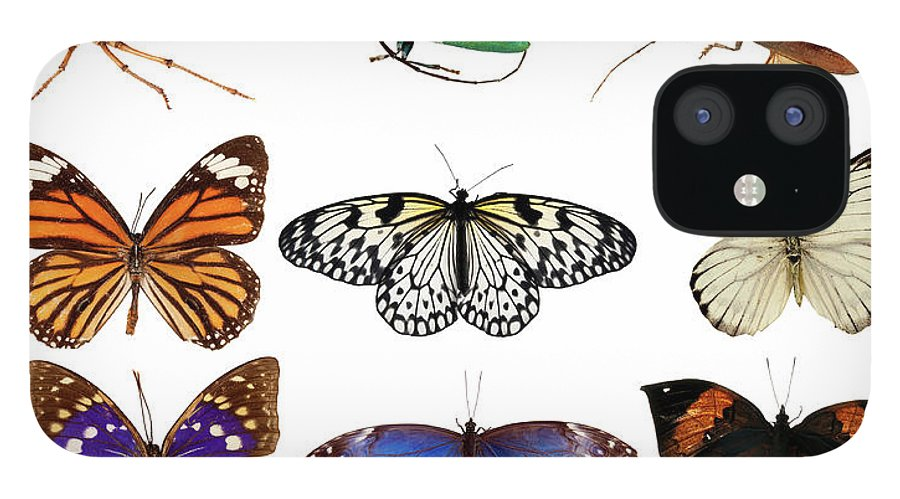 Common Blue Butterfly IPhone 12 Case featuring the photograph Butterflies And Beetles by Mashabuba