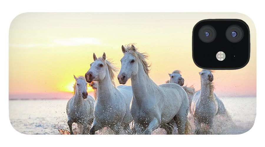 Animal Themes IPhone 12 Case featuring the photograph Camargue White Horses Running In Water by Peter Adams