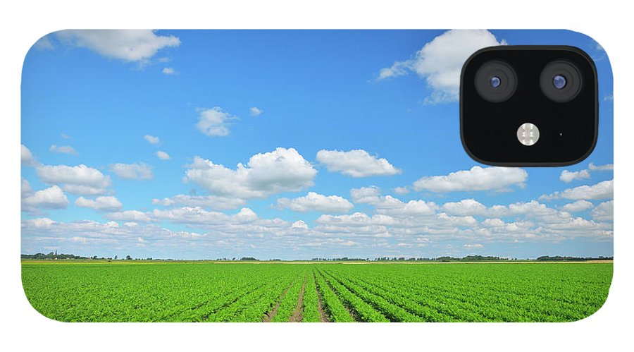 Tranquility iPhone 12 Case featuring the photograph Carrot Field by Raimund Linke