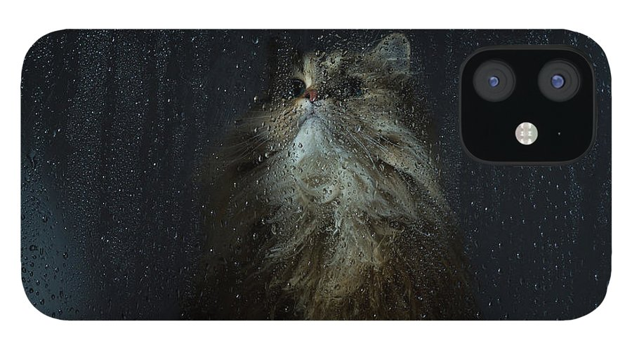 Pets IPhone 12 Case featuring the photograph Cat By Rainy Window by Benjamin Torode