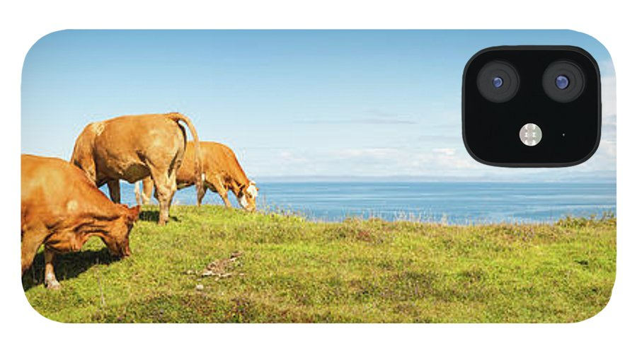 Water's Edge iPhone 12 Case featuring the photograph Cattle Grazing In Picturesque Meadow by Fotovoyager