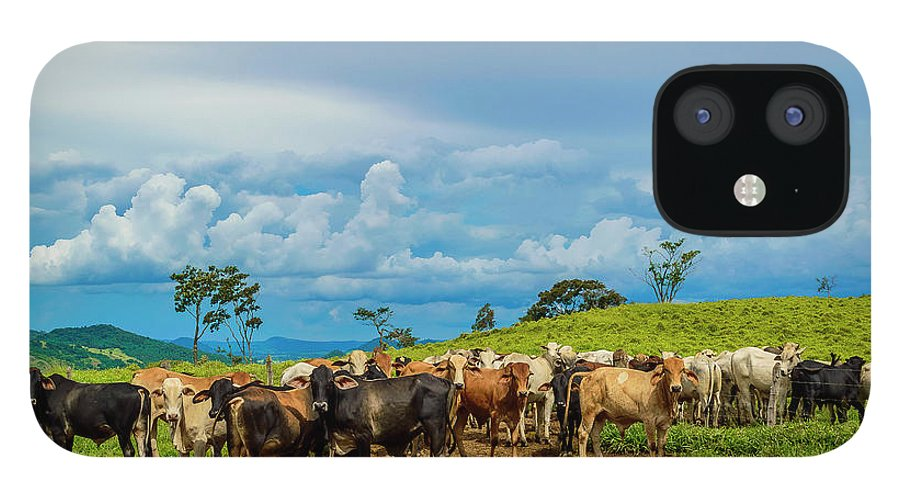 Grass IPhone 12 Case featuring the photograph Cattle by Kcris Ramos